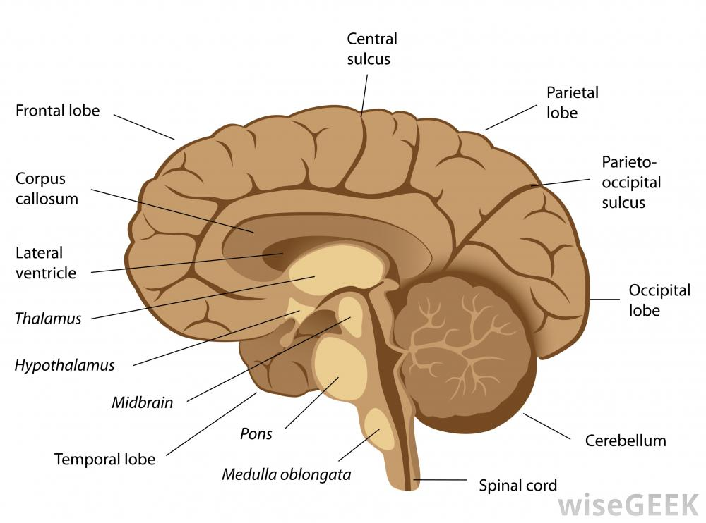 about midbrain activation